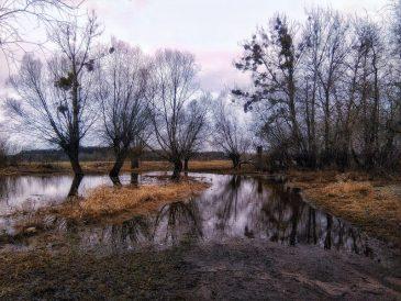 Brochów. Wiosenne rozlewiska Bzury. Foto: Liliana Kołłątaj