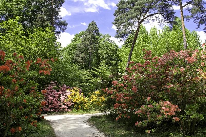 Wiosna w arboretum w Rogowie