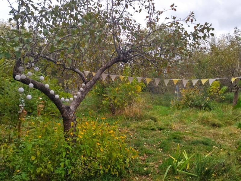 Fort Bema ogród